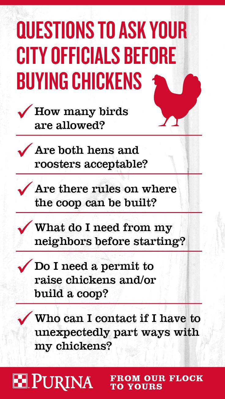 laws of raising chickens