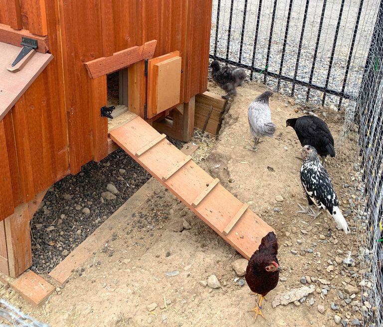 buy a chicken coop in utah
