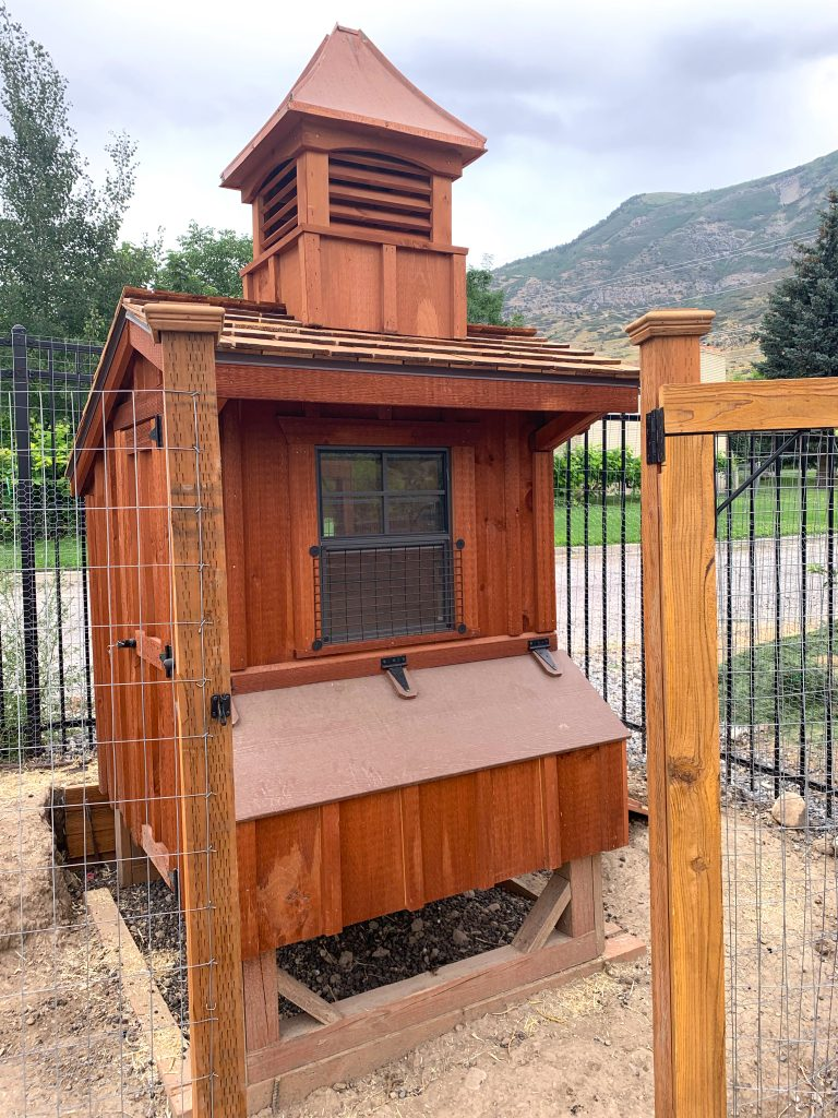 amish chicken coop in utah