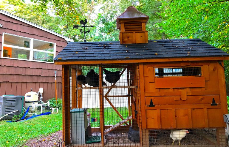 chicken coop story in ct