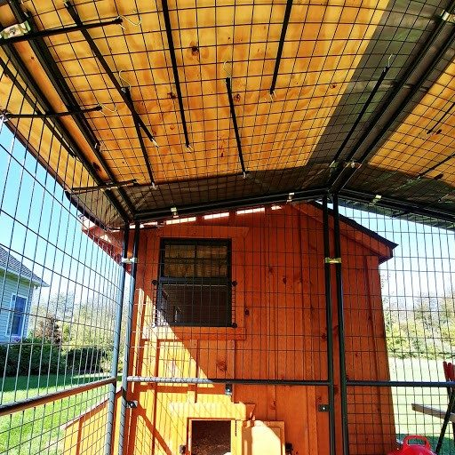 inside a chicken coop in michigan