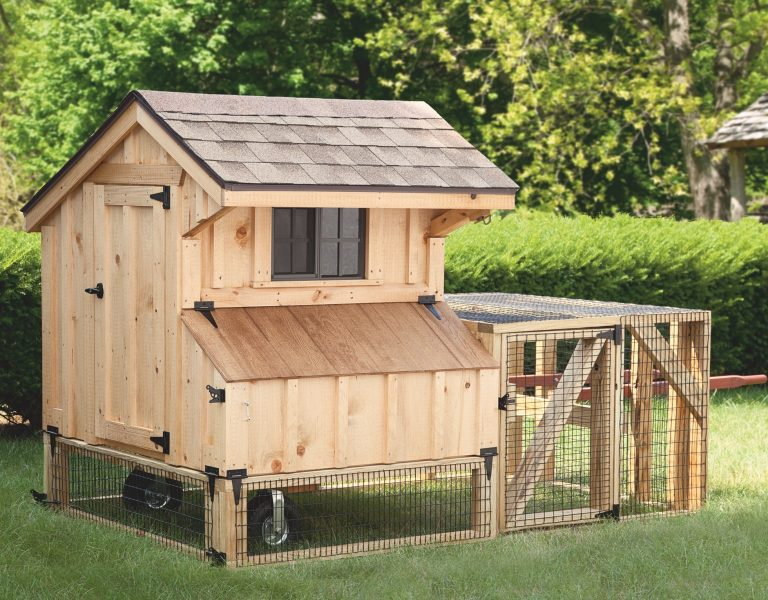 backyard chicken coops featured photo
