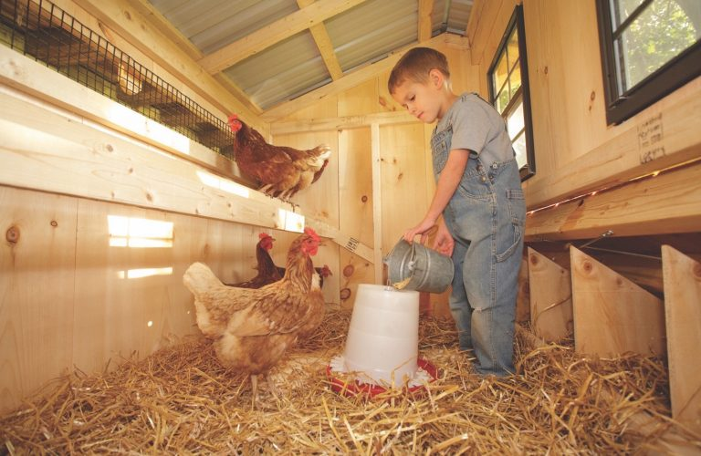 inside a chicken coop Boy With Chickens 1